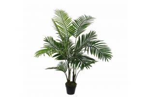 Dekorativna biljka ARECA