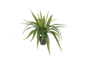 Dekorativna biljka ASPLENIUM