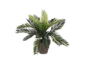 Dekorativna biljka CYCAS