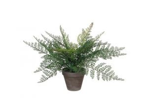 Dekorativna biljka FERN S