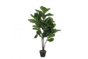 Dekorativna biljka FICUS LYRATA-120 cm