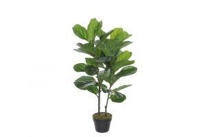 Dekorativna biljka FICUS LYRATA-100 cm