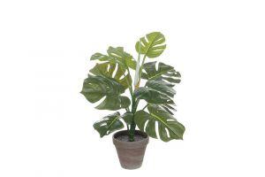Dekorativna biljka PHILO
