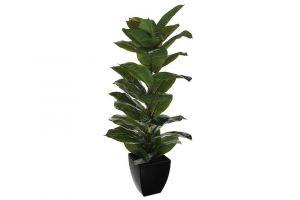 Dekorativna biljka RUBBER